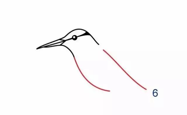 蜂鸟科(Trochilidae)是雨燕目的一科,103属329种。因飞行时两翅振动发出嗡嗡声酷似蜜蜂而得名。蜂鸟体型很小,能够通过快速拍打翅膀(每秒15次到80次,取决于鸟的大小)而悬停在空中,也是是唯一可以向后飞的鸟。蜂鸟飞行的速度是90公里/小时,如果是俯冲的话,时速可以达到100公里。