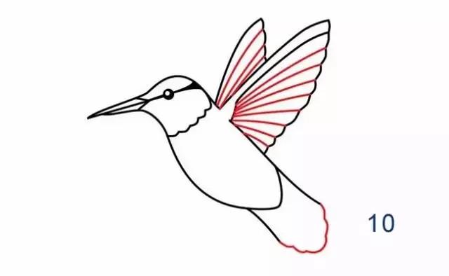 每日一简笔画——你知道世界上最小的鸟是什么鸟吗?