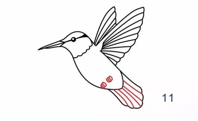 每日一简笔画 你知道世界上最小的鸟是什么鸟吗 快来看看
