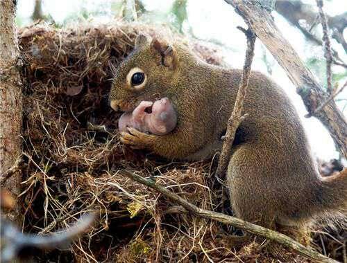 温暖:动物王国里的母爱满满时刻