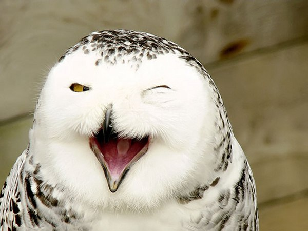 动物们的微笑表情大集锦萌图