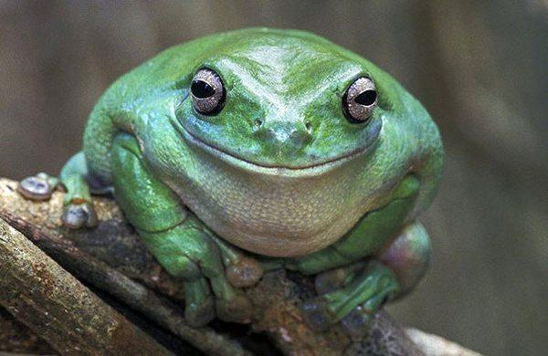 你知道动物也会笑吗?动物们的微笑表情大集锦萌图