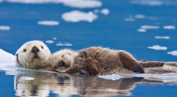 动物们的亲子照,超可爱!
